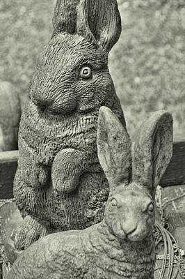 Photograph - Stone Bunnies by JAMART Photography