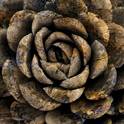 Photograph - Stone Rose by Dutch Bieber