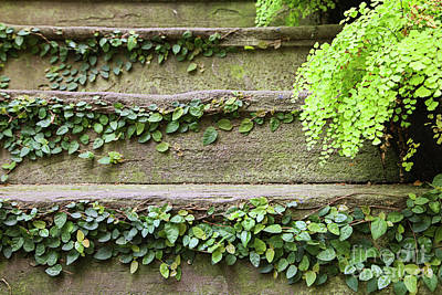 Photograph - Stone Stairs With Ivy by Heather Green