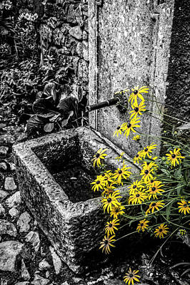 Stone Trough Photograph - Stone Trough With Colour Selected Flowers by Steve Whitham