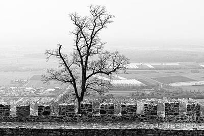 Photograph - Stone Wall And A Tree by Les Palenik