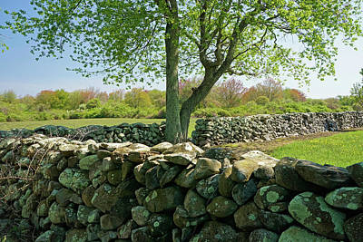 Photograph - Stone Wall In Rhode Island by Nancy De Flon