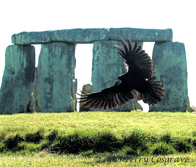 Photograph - Stonehenge Crow by Terry Cosgrave