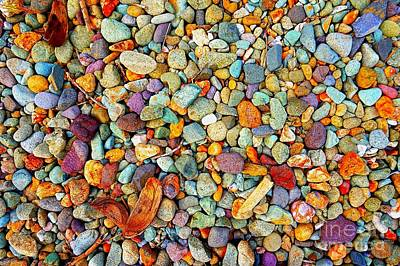 Photograph - Stones And Barks On Beach by Christopher Shellhammer