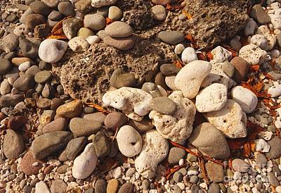 Photograph - Stones And Corals by Christopher Shellhammer
