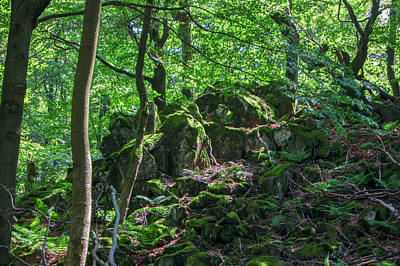 Stones In A Forest In Vogelsberg Art Print