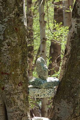 Mount Baldy Photograph - Stones Stuck Between Trees by Viktor Savchenko