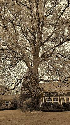 Photograph - Stony Brook Crochet Tree Sepia by Rob Hans