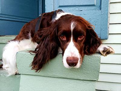 Photograph - Stoop Dog by John Duplantis
