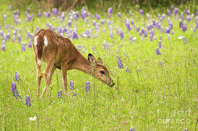 Stop And Smell The Bluebonnets. Art Print