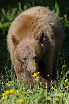 Photograph - Stop And Smell The Dandelions by Dee Cresswell