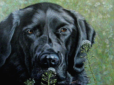 Fuqua - Artwork Drawing - Stop And Smell The Flowers by Beverly Fuqua