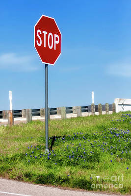 Photograph - Stop For The Blue Bonnets by Joan Bertucci