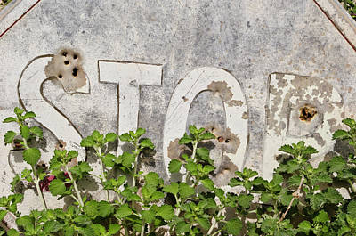 Photograph - Stop Sign by David Gordon