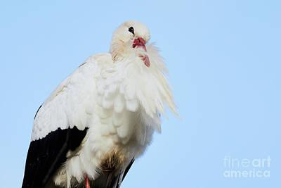 Photograph - Storck Closeup by Nick Biemans