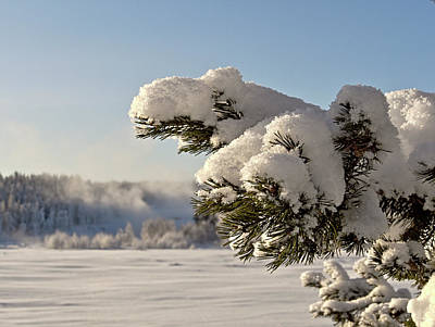 Photograph - Storforsen, Visit Lapland by Tamara Sushko