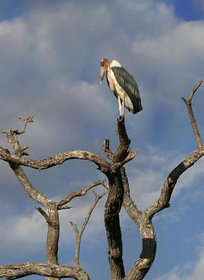 Stork  Original