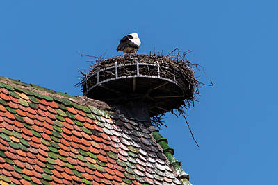 Vineyards Of Alsace Photograph - Stork Nest - Colmar France by Jon Berghoff