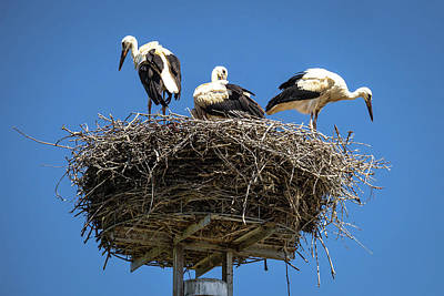 Photograph - Stork Nest With Blue Sky Background by Brch Photography