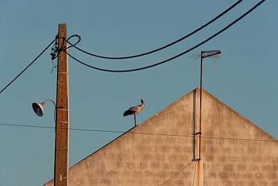 Photograph - Stork On A Roof by Menega Sabidussi