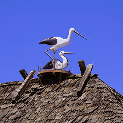 Good Luck Photograph - Storks In Solvang by Art Block Collections
