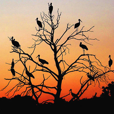 Storks In The Evening Sun Light Art Print