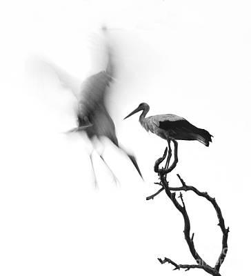 Storks Art Print by Nahum Budin