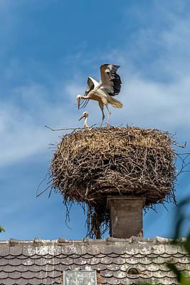 Stork Photograph - Storks Nesting In Munster by W Chris Fooshee