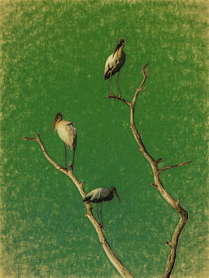 Photograph - Storks On Dead Tree by Richard Goldman