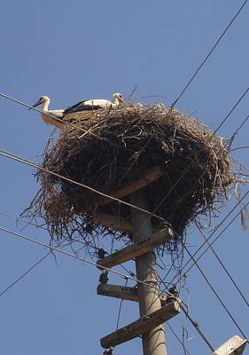 Painting - Storks On Electric Pylon by Tracey Harrington-Simpson