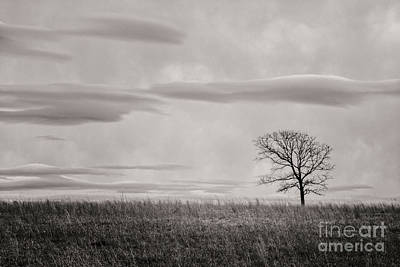 Photograph - Storm Approaches Tree by Imagery by Charly