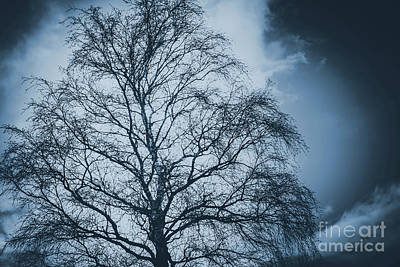 Storm Clouds And Eerie Spidery Tree Art Print