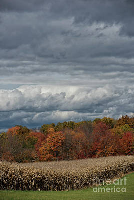 Photograph - Storm Clouds by Nicki McManus