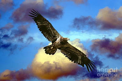 Photograph - Storm Eagle by Myrna Bradshaw