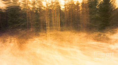 Photograph - Storm In The Forest by Ismo Raisanen