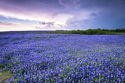Wildflowers In Texas Photograph - Storm Is Coming In Wildflower Field - Bluebonnet by Ellie Teramoto