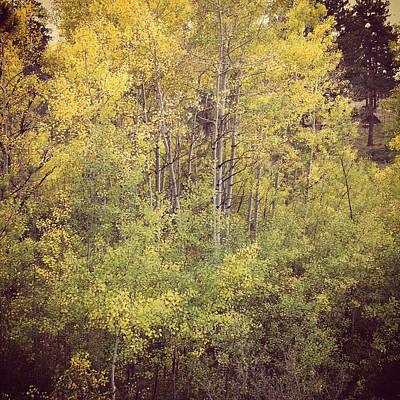 Photograph - Storm Mountain Aspen Trees by Warren Diggles