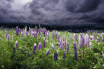 Photograph - Storm Over Lupine by Wayne King