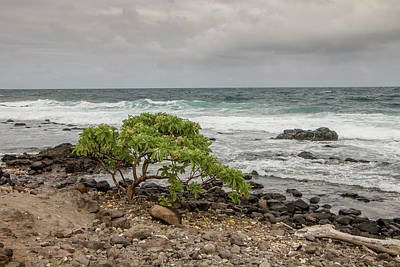 Photograph - Stormy Beach by Teresa Wilson