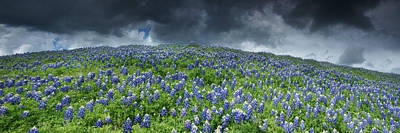 Fields Of Flowers Photograph - Stormy Blues - Craigbill.com - Open Edition by Craig Bill