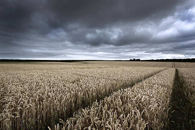 Cornfields Photograph - Stormy Cornfields by Ian Hufton