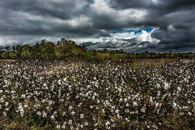 Stormy Cotton Field Art Print