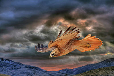 Red Tail Hawk Wall Art - Photograph - Stormy Flight by Donna Kennedy