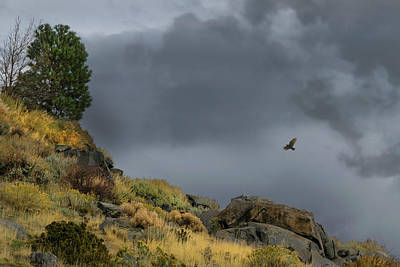 Photograph - Stormy Flight by Frank Wilson