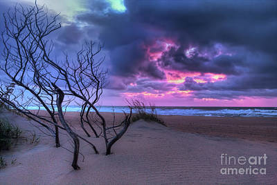 Photograph - Stormy Outer Banks Sunrise And Bush by Dan Carmichael