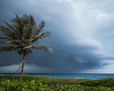 Photograph - Stormy Palm Delray Beach Florida by Lawrence S Richardson Jr