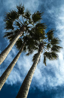 Photograph - Stormy Palms 1 by David Smith