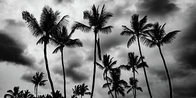 Photograph - Stormy Palms by Mark Robert Rogers