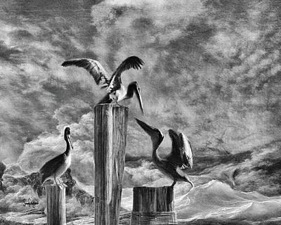 Digital Art - Stormy Pelicans by Sandra Schiffner