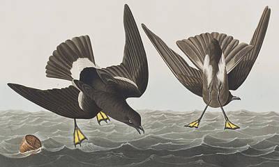 Barrel Painting - Stormy Petrel by John James Audubon